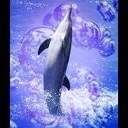 Delfin - 1