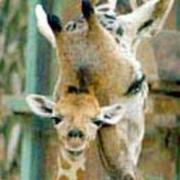 Jirafa y bebe jirafa